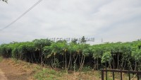 Land Baan Amphur Land For Sale in  South Jomtien