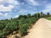 Land in Bang Saray Land For Sale in  East Pattaya