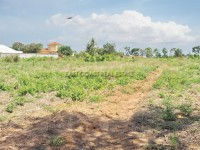 Mabprachan Land For Sale in  East Pattaya